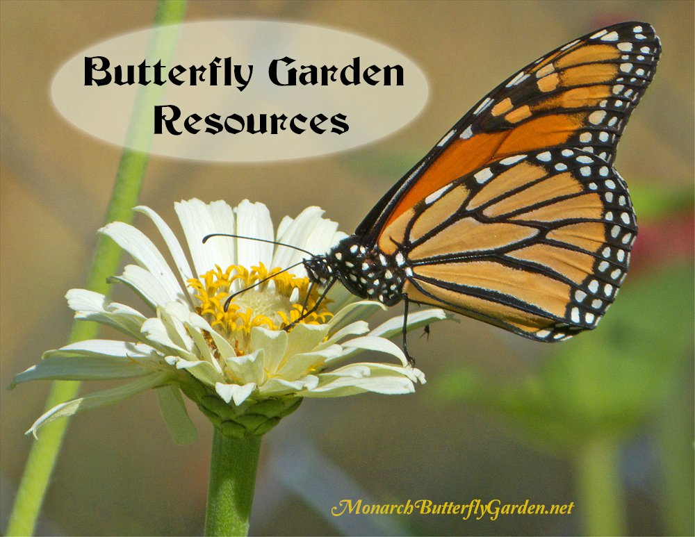 Tips, Tools, and Resources to Help make your Butterfly Garden a Fly-away Success.
