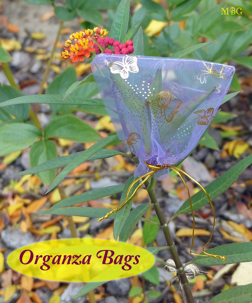Tie organza bags around your milkweed pods before they burst open so your seeds don't blow away before harvest. They also make attractive gift bags for sharing your seeds. Find seed-saving organza bags and other helpful resources for your butterfly garden...