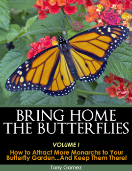 Bring Home The Butterflies Ebook  How To Attract More Monarchs To Your Butterfly  Garden