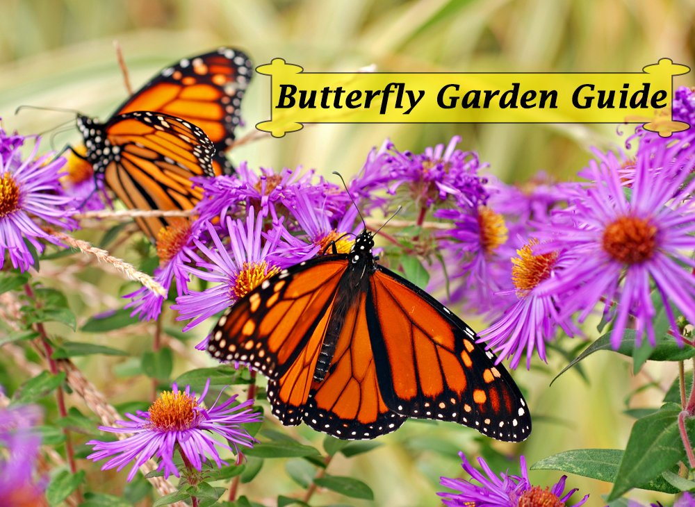 Monarch butterfly garden book instant download for Monarch house