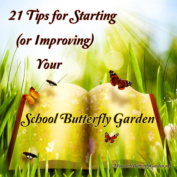 21 Tips to consider for creating a School Butterfly Garden filled with Magnificent Monarchs and their Pollinator friends.