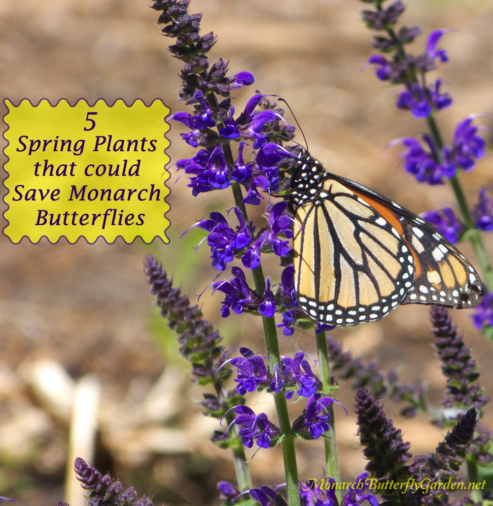 5 Spring Plant Ideas That Could Help Save The Struggling Monarch Population  And Their Amazing Fall