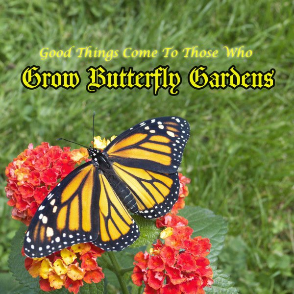 13 Photography Tips to Enhance your Butterfly Pictures