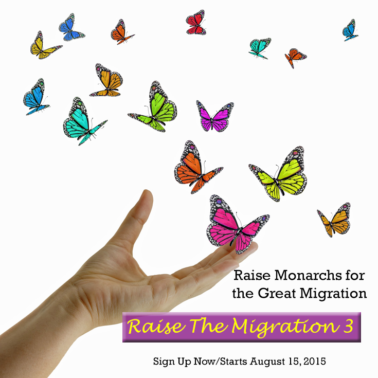 Raise The Migration 3- Raise Monarch Butterflies to Release for the Magical Monarch Migration.