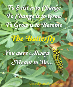 A black swallowtail caterpillar sheds it skin to continue it's amazing transformation to butterfly- quotes and growth and change