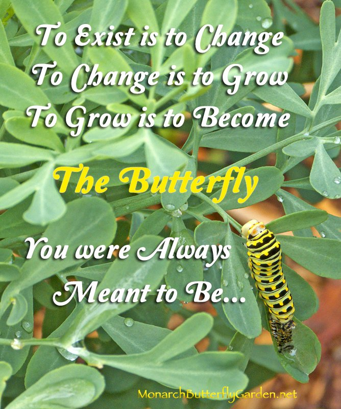 An inspirational quote about growth and change with an inspirational photo of a black swallowtail caterpillar shedding its old ways (skin) to continue an amazing butterfly transformation...