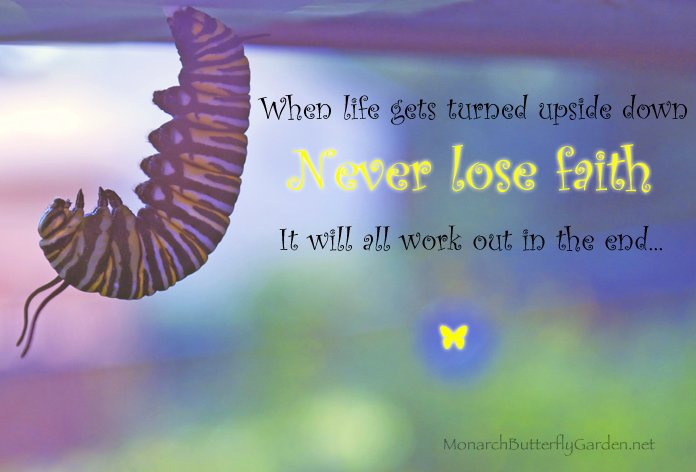 Inspirational Quote with Monarch Caterpillar Photo- Never Lose Faith