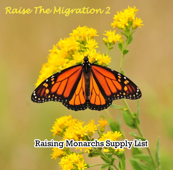 Supply List for Raising Monarch Butterflies