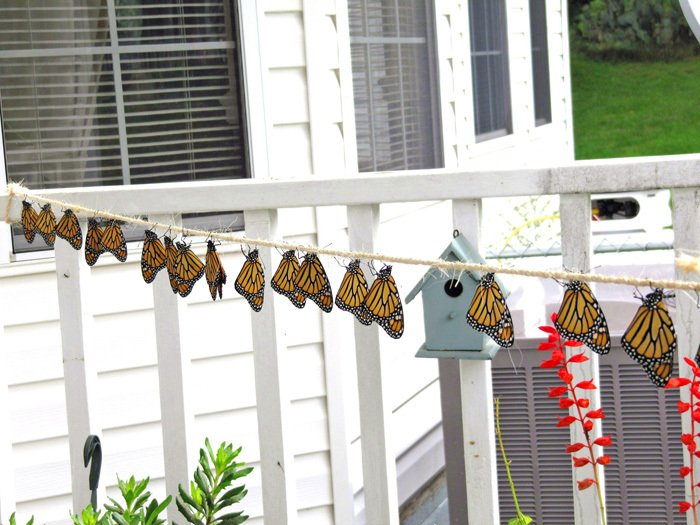 Monarchs Hanging to Dry their Wings from a Rope