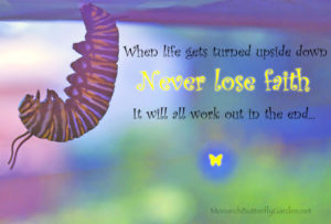 Monarch Caterpillar Photo w/ Inspirational Quote: Never Lose Faith