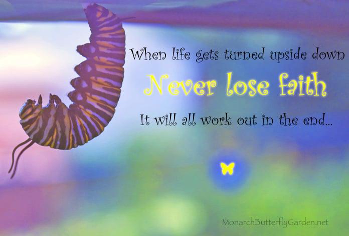 monarch caterpillar inspiration never lose faith