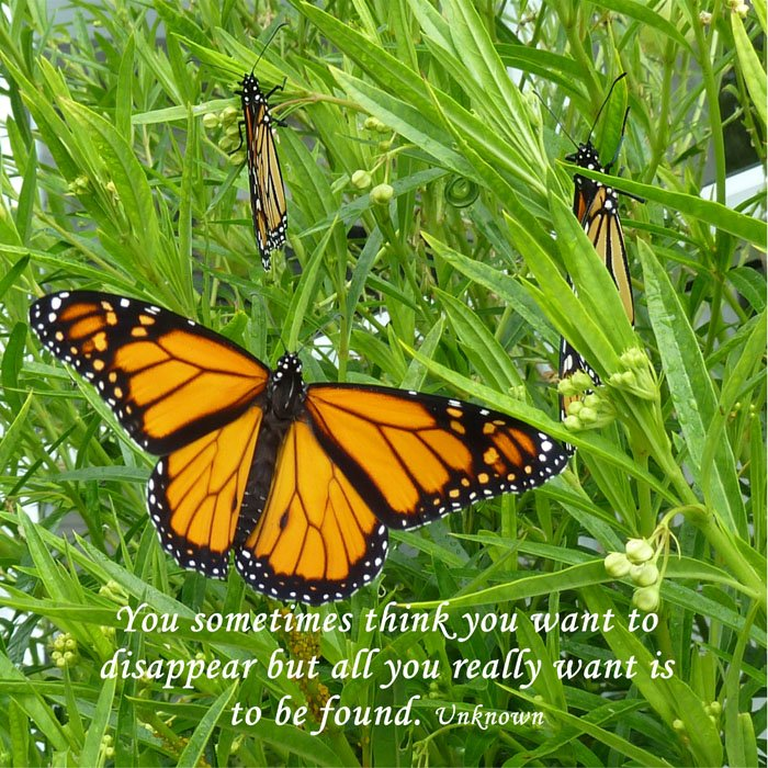 Inspirational Butterfly Photo- wanting to be found