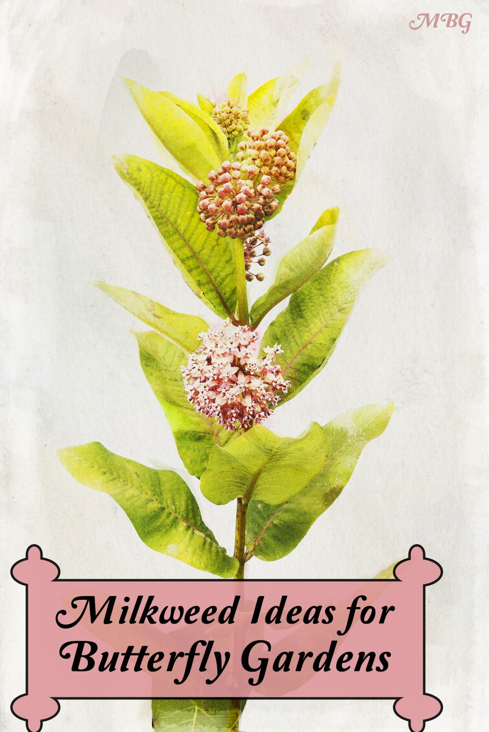 25+ Milkweed Plant Ideas for Supporting Monarch Butterflies, Caterpillars, and other Beneficial Pollinators in your Butterfly Garden. Discover milkweed options for your region and learn where you can find milkweed seeds and plants.