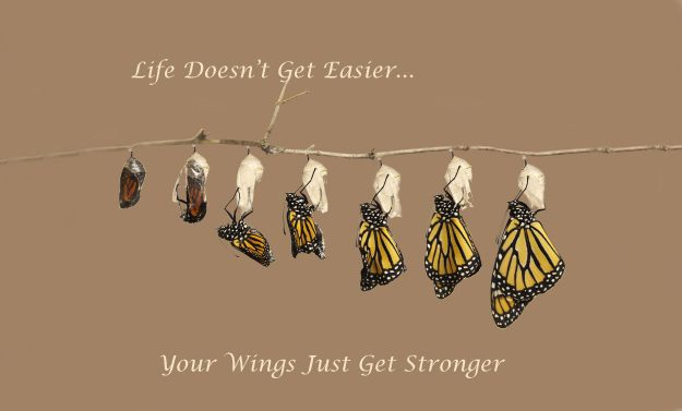 Inspirational Saying about Life with a hatching Monarch Butterfly + Raising Monarch Butterflies?