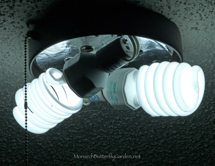 Compact Fluorescent Lightbulbs Are A More Affordable Way To Get Your Indoor  Butterfly Plants Extra Sunlight Sunlight In A Bulb