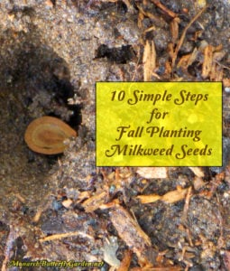 10 Simple Steps for Fall Planting Milkweed Seeds