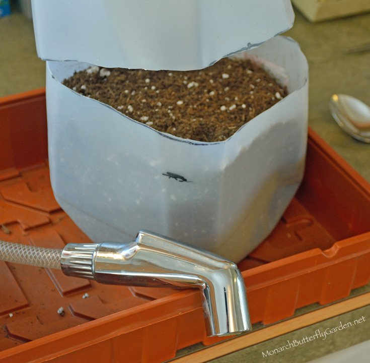Wet your winter sowing container soil before planting your seeds