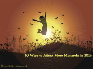 10 Ways to Attract More Monarchs in 2014