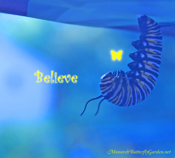 Inspirational Quote with a Monarch Caterpillar- When it seems you've lost the fight, believe your wings will soon take flight!