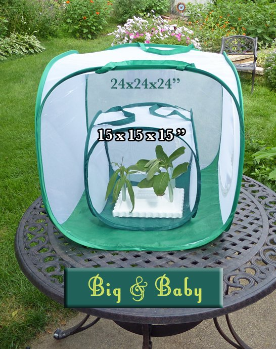 Big Cube and Baby Cube Butterfly Cage Comparison- Which size fits your needs for raising monarch butterflies?