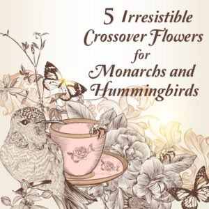 7 Butterfly Flowers Irresistible to Monarchs…and Hummingbirds!