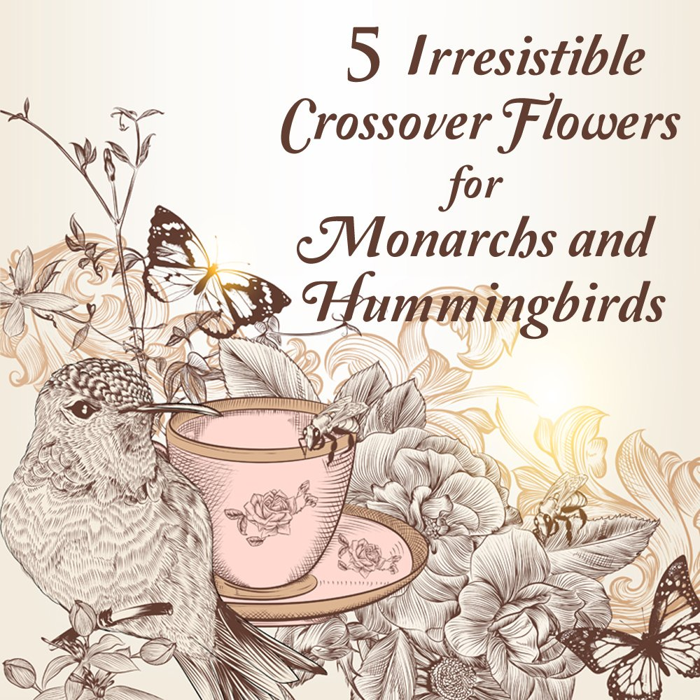 7 Butterfly Flowers For Monarchsd Hummingbirds