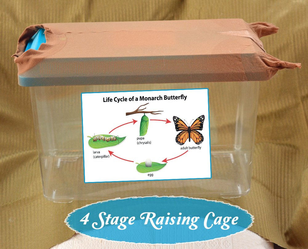 Discover 3 Caterpillar Cages that have helped us to consistently Raise Monarch Butterflies with a 95% Survival Rate, and can boost your raising success too...never lose a baby caterpillar again!