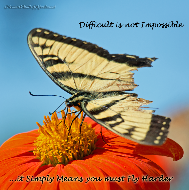 Swallowtail Butterfly Inspiration With Quote For Overcoming Obstacles