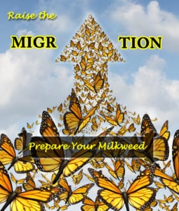 Prepare Your Milkweed Plants for Monarchs- Raise The Migration