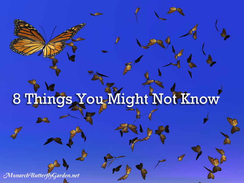 10 Things You Might Not Know about Fall's Annual Monarch Migration