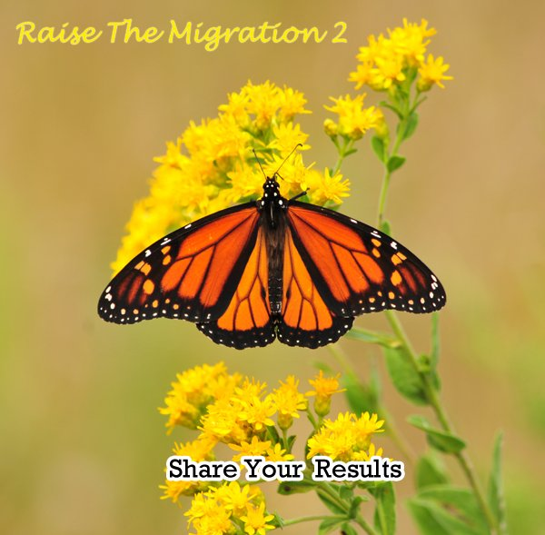 Raise Hope for the 2014 Monarch Migration- Share Your Raise The Migration 2 Results