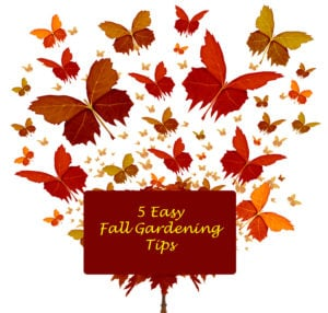 5 Easy Fall Gardening Tips for your Butterfly Garden