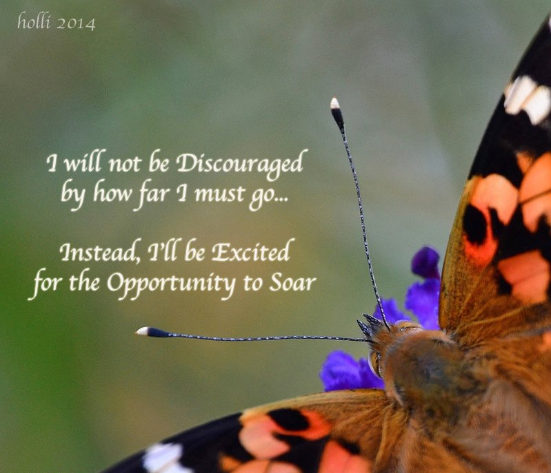 Painted Lady Inspirational Quote + Host Plant Ideas for PL Caterpillars