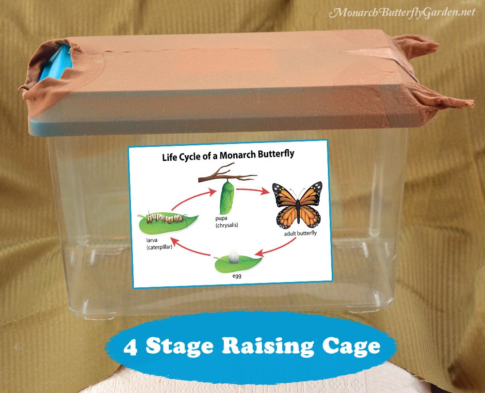 Four Stage Raising Cage for Raising Monarch Butterflies- Gift Idea 7
