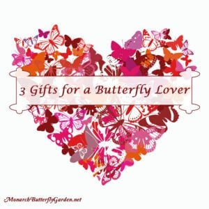 3 Valentine Gift Ideas for a Butterfly Lover