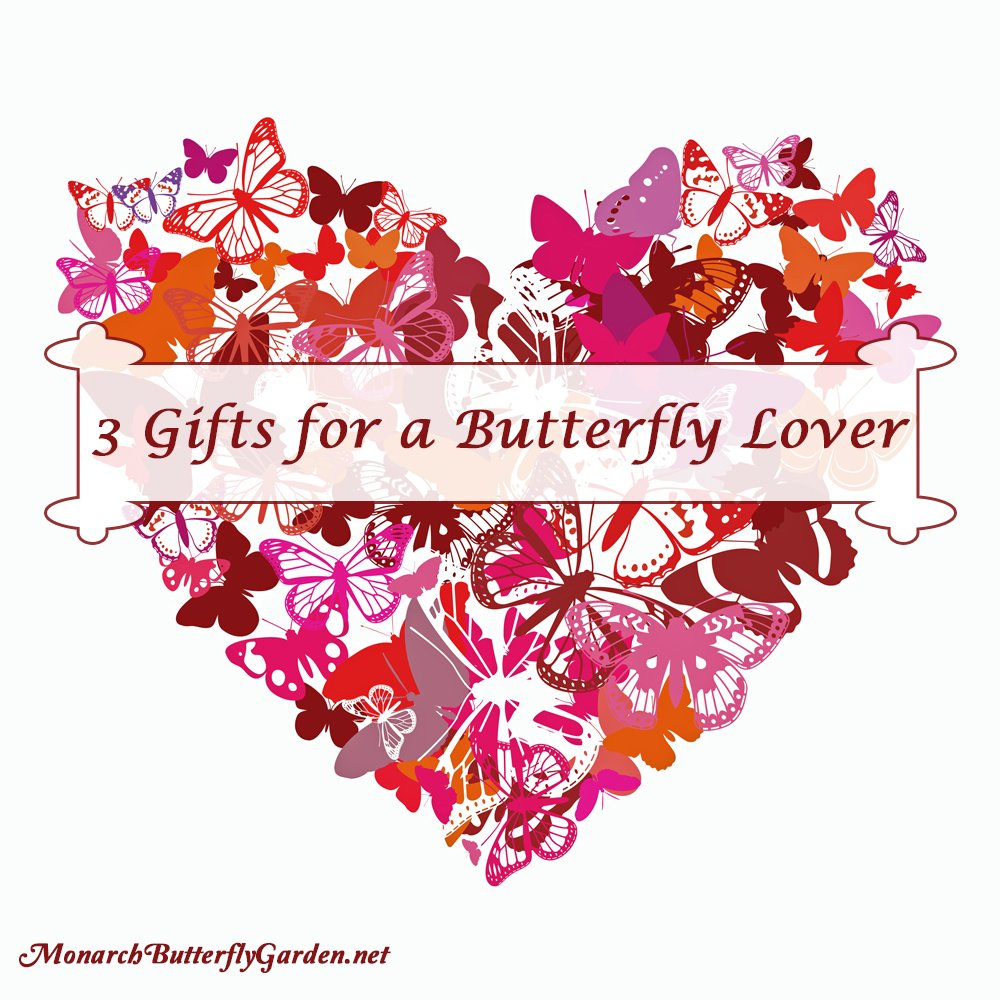3 Valentine Gift Ideas for a Butterfly Lover that will make their heart flutter!