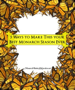 5 Ways to Support Monarch Butterflies WHILE Making 2019 your Best Monarch Season yet...