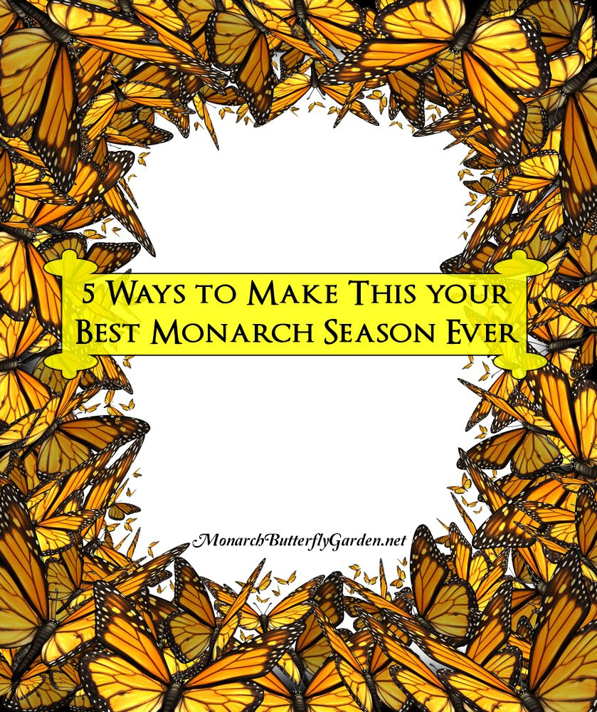 5 Ways to Support Monarch Butterflies WHILE making 2017 your Best Monarch Season yet...