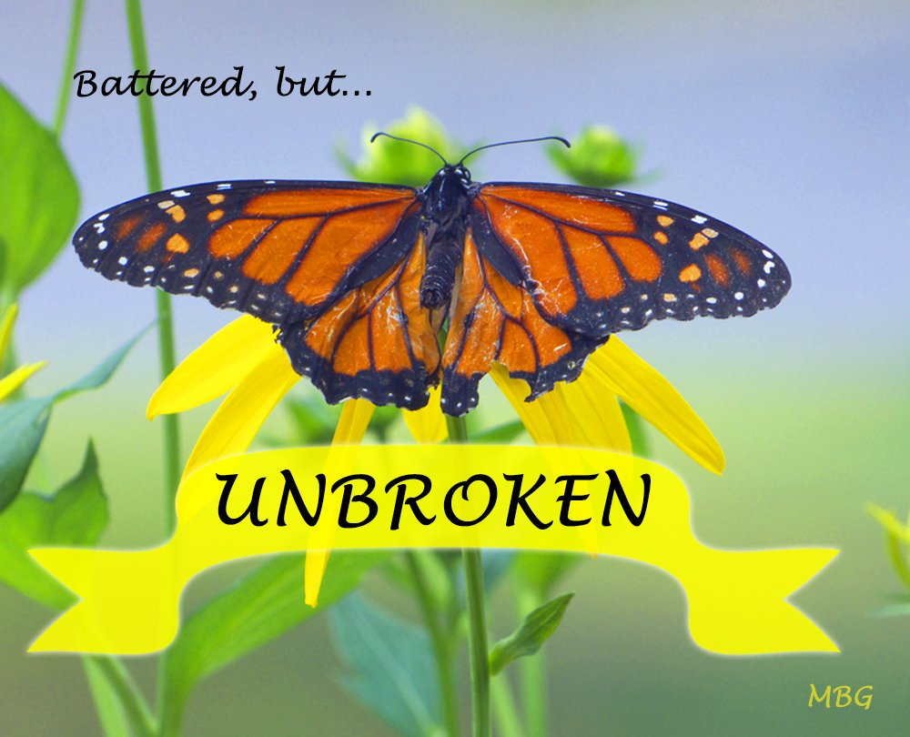 A tattered and torn monarch butterfly picture is an inspiration to move forward in spite of the struggles we may face. It's not about the struggles you're faced with in life, but whether you choose to move forward with your wings spread wide, ready to fly again...