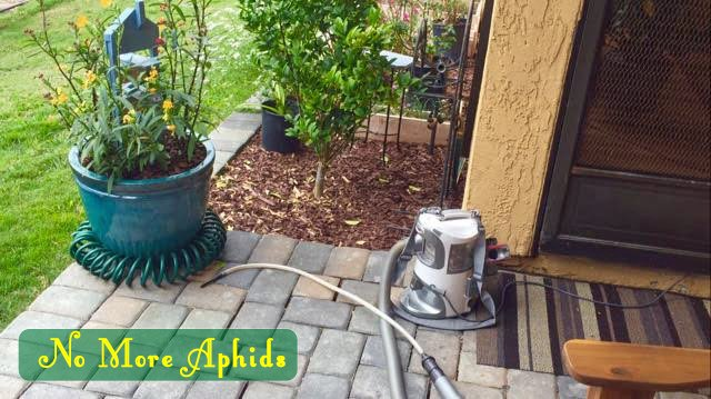 Stop Aphids from Taking Over your Milkweed Idea 9- Aphids in a Vacuum
