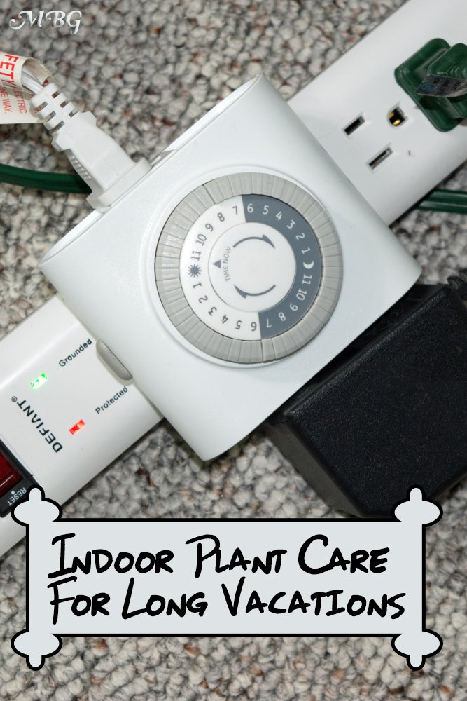 How To Care for Indoor House Plants When Gone on Long Trips: Tip 14- Use a Grow Light Timer and your plants could even look better when you return!