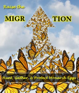 How to Hunt, Gather, and Protect Monarch Eggs- Raise The Migration 2019