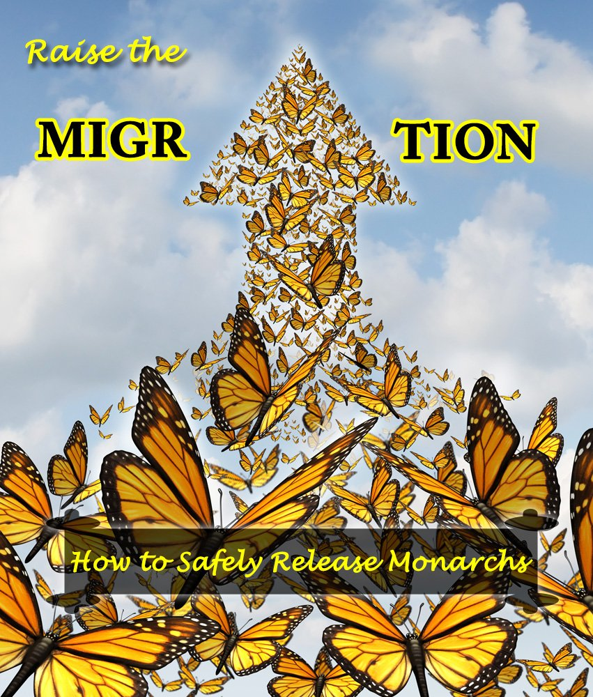 How to Safely Release Monarch Butterflies- Raise The Migration