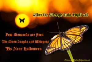 Halloween Butterflies with a Haunting Halloween Quote