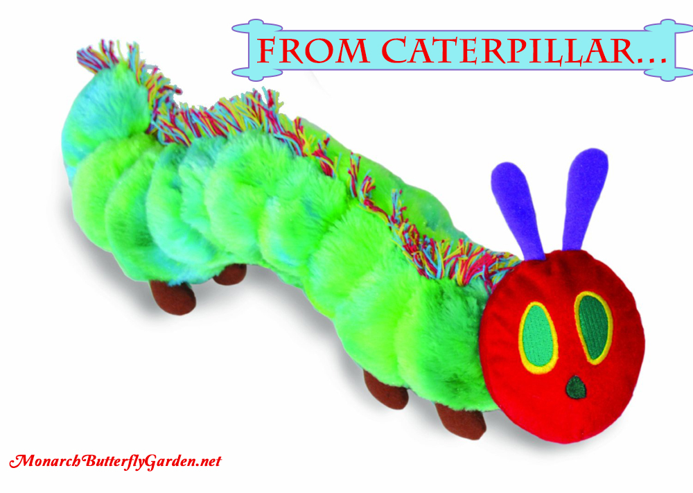 The Very Hungry Caterpillar Reversible Plush Toy- Butterfly Gift ideas for Kids