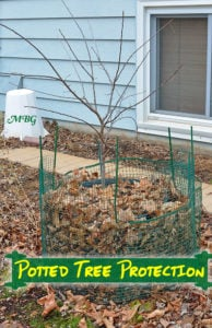 Potted Trees for Butterfly Host Plants- How to protect container plants from Old Man Winter