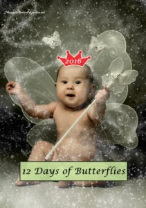 The Twelve Days of Butterflies- Butterfly Gift Ideas 2016