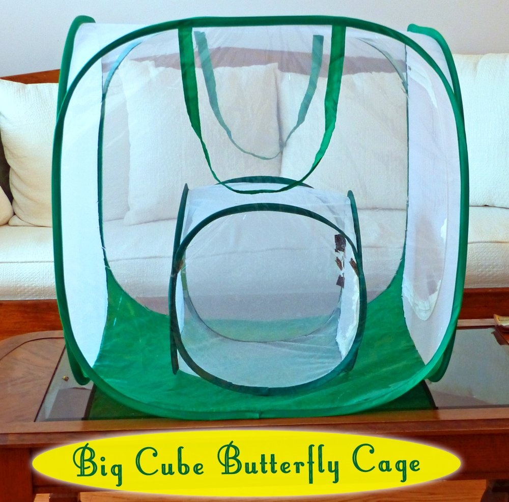 The Big Cube Butterfly Cage is 8x larger than the traditional cube cage, but still folds flat for easy storage. Get one for raising healthy monarch butterflies and caterpillars...