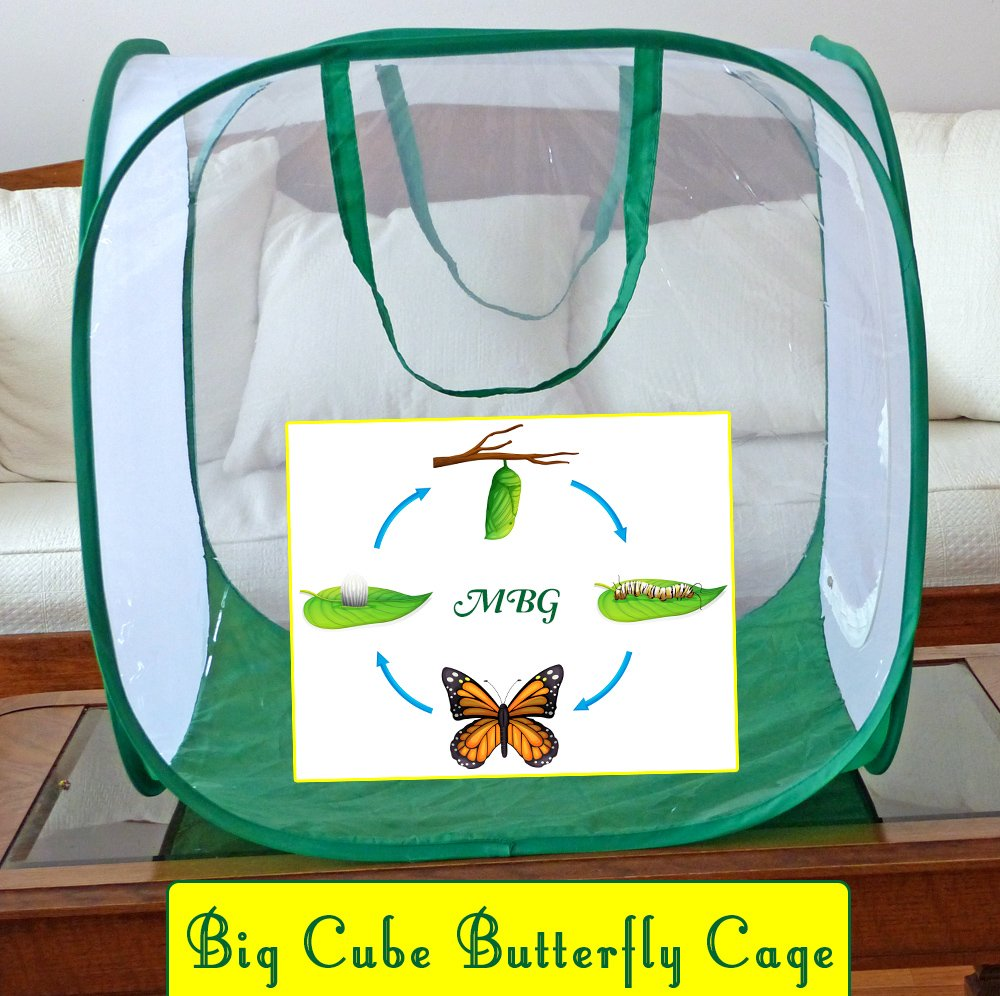 The Big Cube Butterfly Cage is 8x larger than traditional pop-up cubes, and a high quality monarch butterfly habitat for raising more caterpillars and butterflies. More Photos and Info here...