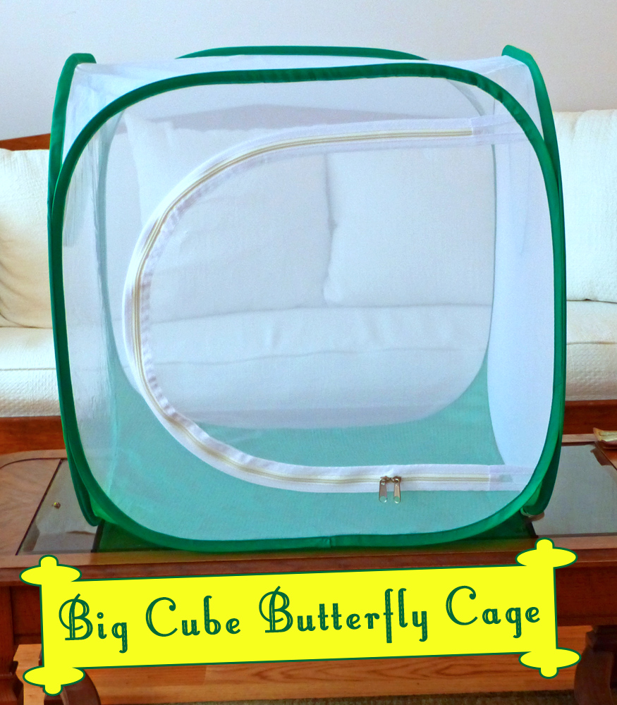 The Big Cube Monarch Butterfly Habitat is a Monarch Safe House for Raising Butterflies. The side opening has two zippers and closes securely to keep your monarchs in, and predators out. Get more info here...